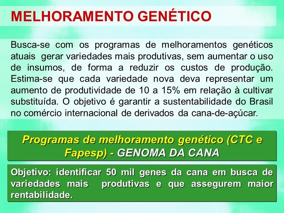 MELHORAMENTO GENÉTICO Busca-se com os programas de melhoramentos genéticos atuais gerar variedades mais produtivas, sem aumentar o uso de insumos, de forma a reduzir os custos de produção.