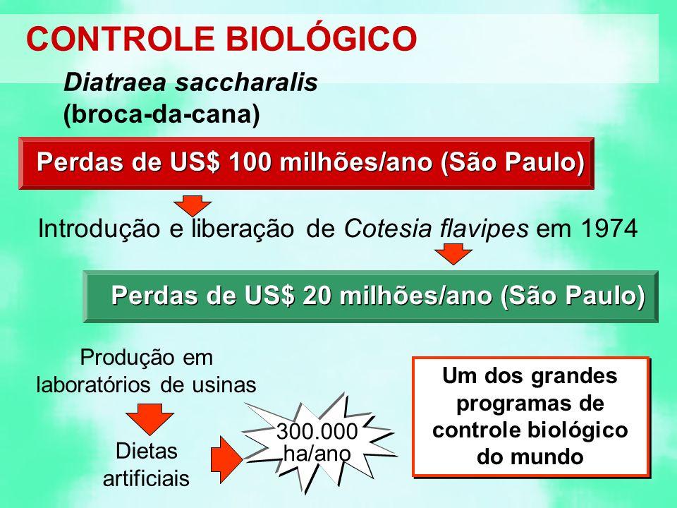 CONTROLE BIOLÓGICO Diatraea saccharalis (broca-da-cana) Perdas de US$ 100 milhões/ano (São Paulo) Introdução e liberação de Cotesia flavipes em 1974 Perdas de US$ 20 milhões/ano (São Paulo) Produção em laboratórios de usinas Dietas artificiais 300.000 ha/ano Um dos grandes programas de controle biológico do mundo
