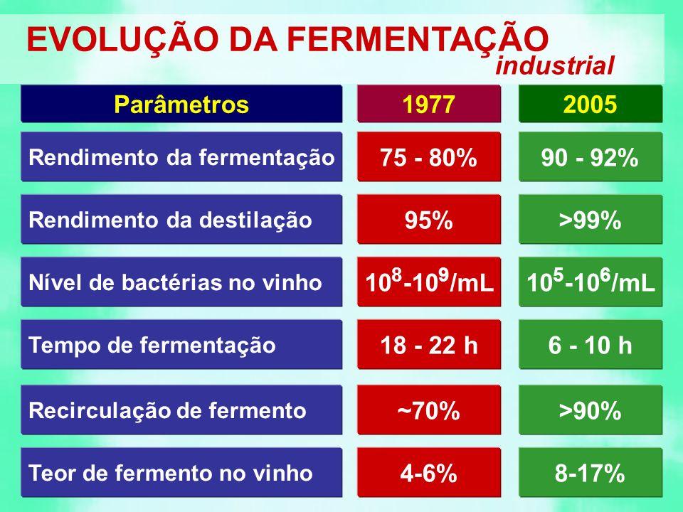 Rendimento da fermentação 75 - 80%90 - 92% 19772005Parâmetros Nível de bactérias no vinho 10 8 -10 9 /mL Tempo de fermentação 18 - 22 h6 - 10 h Recirculação de fermento ~70%>90% 10 5 -10 6 /mL Rendimento da destilação 95%>99% Teor de fermento no vinho 4-6%8-17% EVOLUÇÃO DA FERMENTAÇÃO industrial