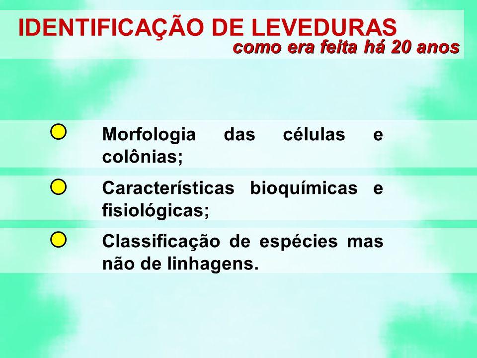 IDENTIFICAÇÃO DE LEVEDURAS como era feita há 20 anos Morfologia das células e colônias; Características bioquímicas e fisiológicas; Classificação de espécies mas não de linhagens.