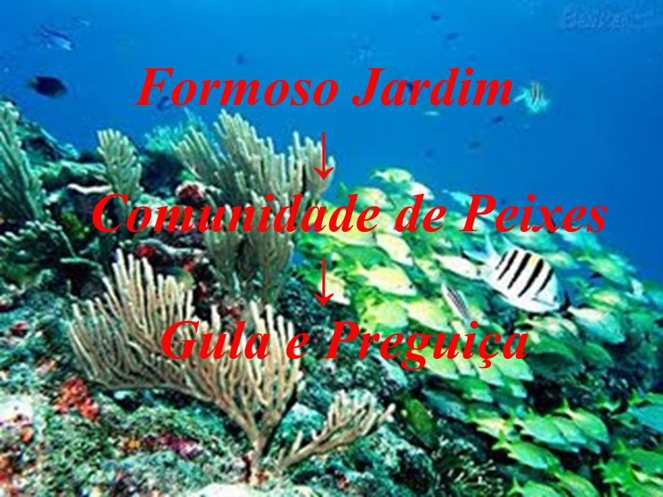 Formoso Jardim Comunidade de Peixes Gula e Preguiça