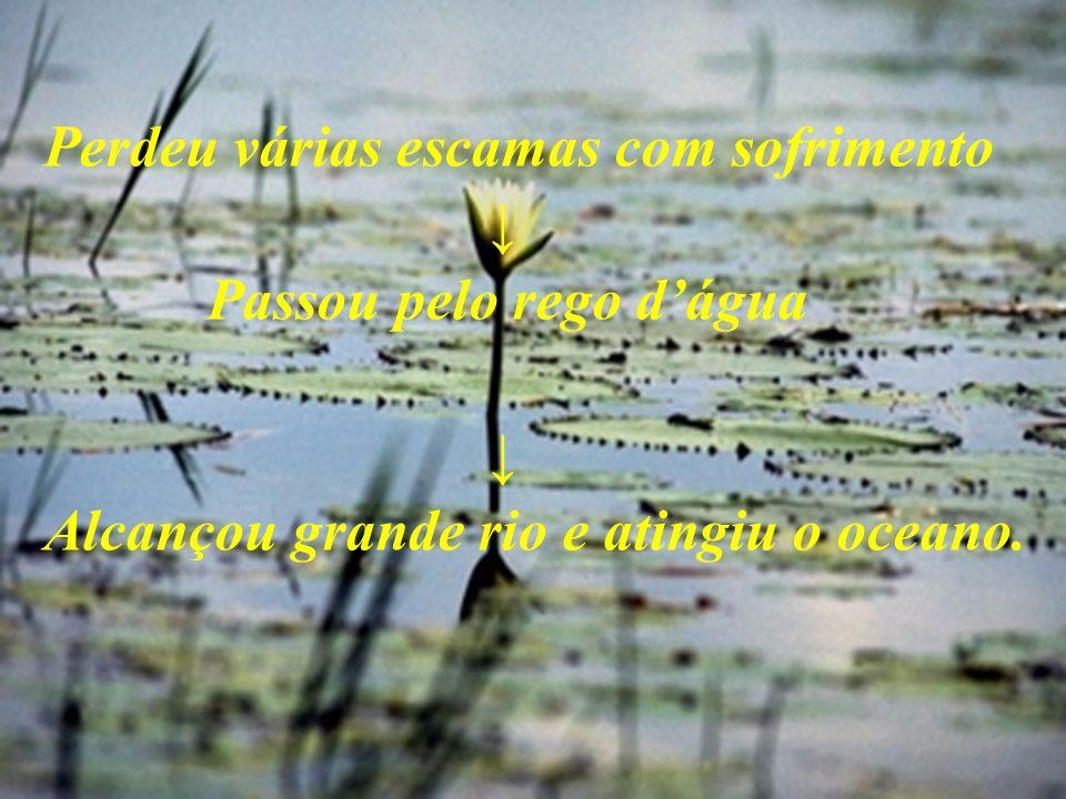 Perdeu várias escamas com sofrimento Passou pelo rego dágua Alcançou grande rio e atingiu o oceano.