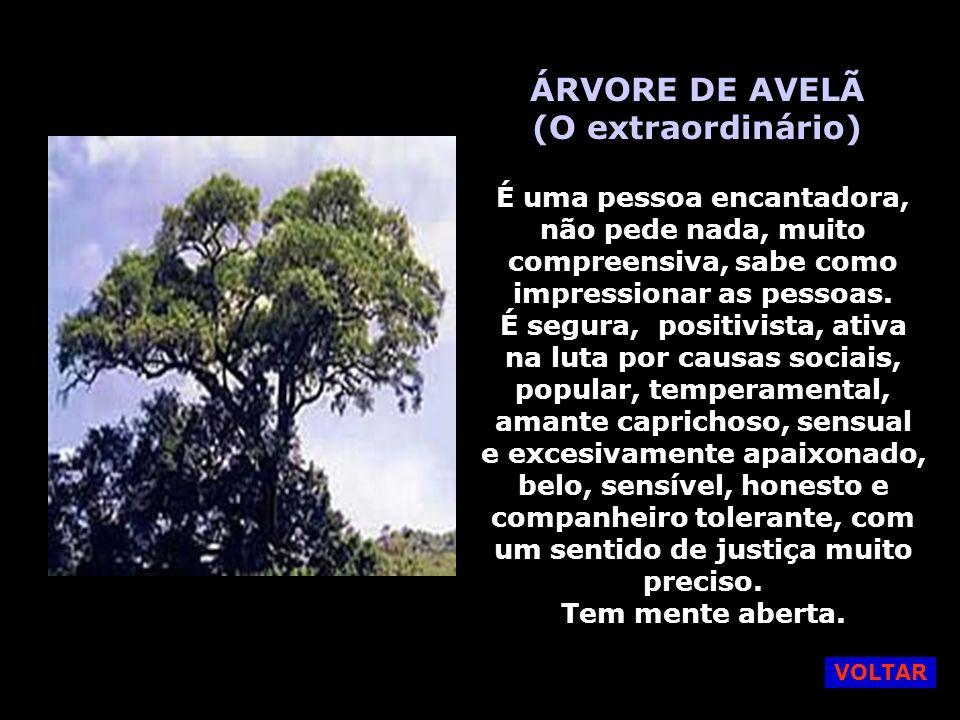 CARVALHO ROBLE (A Valentia) É uma pessoa robusta da natureza, valente, forte, implacável, independente, sensível, não gosta de mudanças, mantém seus pés no chão.