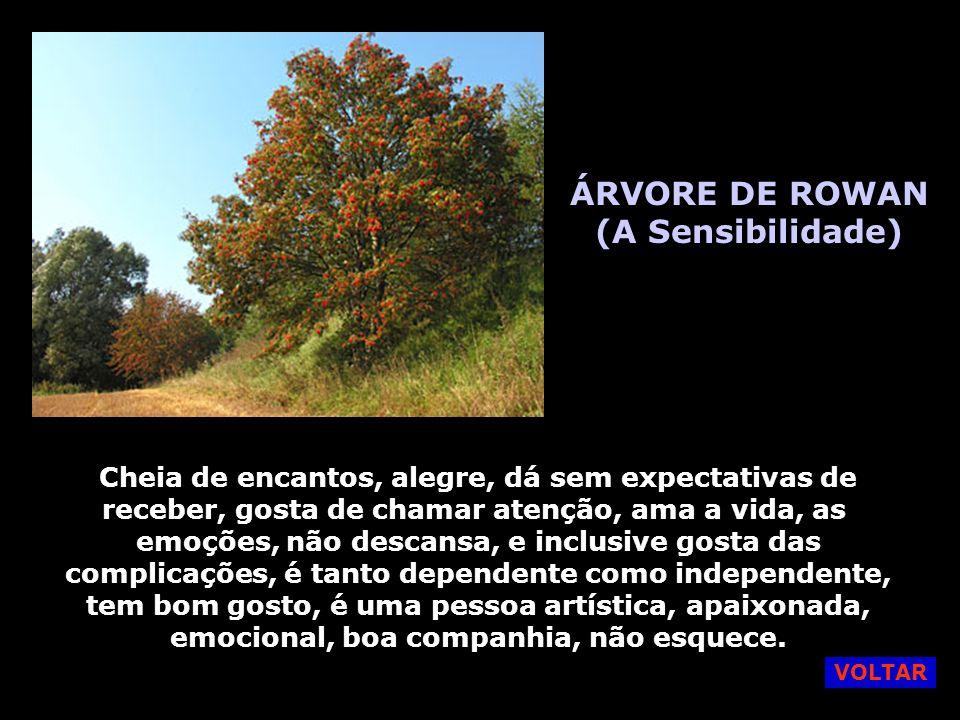 ÁRVORE DE AVELÃ (O extraordinário) É uma pessoa encantadora, não pede nada, muito compreensiva, sabe como impressionar as pessoas. É segura, positivis