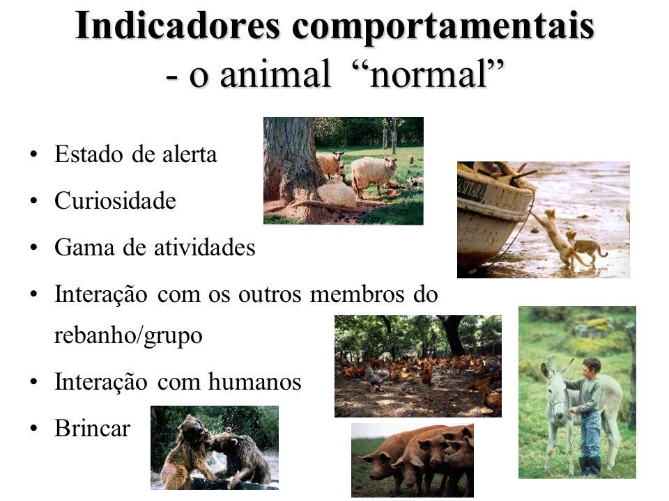 Indicadores comportamentais - o animal normal Estado de alerta Curiosidade Gama de atividades Interação com os outros membros do rebanho/grupo Interaç