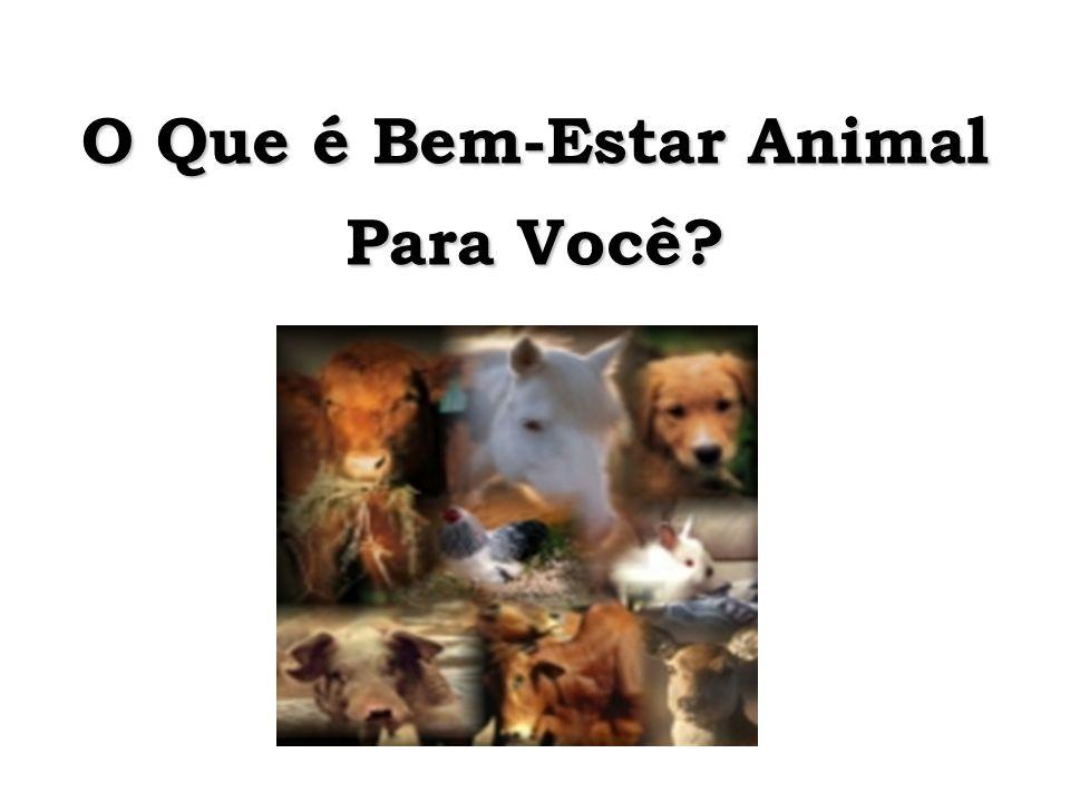 O Que é Bem-Estar Animal Para Você?