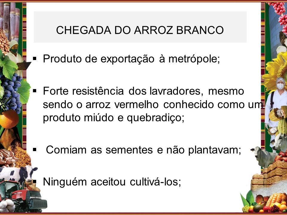CHEGADA DO ARROZ BRANCO Produto de exportação à metrópole; Forte resistência dos lavradores, mesmo sendo o arroz vermelho conhecido como um produto mi