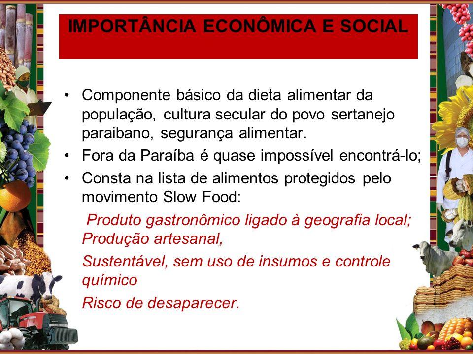 Componente básico da dieta alimentar da população, cultura secular do povo sertanejo paraibano, segurança alimentar. Fora da Paraíba é quase impossíve