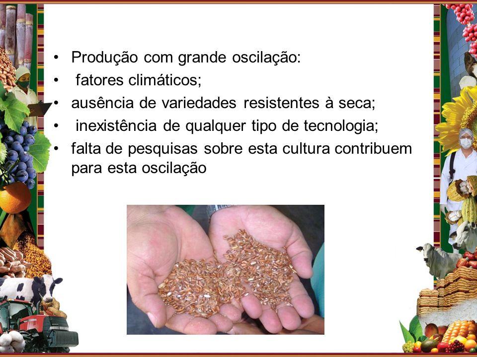 Produção com grande oscilação: fatores climáticos; ausência de variedades resistentes à seca; inexistência de qualquer tipo de tecnologia; falta de pe