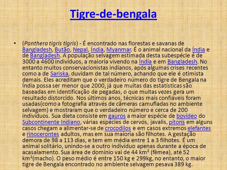 Tigre-de-bengala (Panthera tigris tigris) - É encontrado nas florestas e savanas de Bangladesh, Butão, Nepal, Índia, Myanmar. É o animal nacional da Í