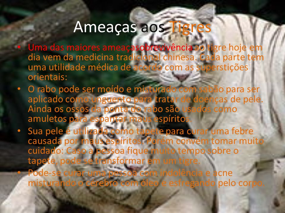 Ameaças aos Tigres Uma das maiores ameaçasobrevivência ao tigre hoje em dia vem da medicina tradicional chinesa. Cada parte tem uma utilidade médica d