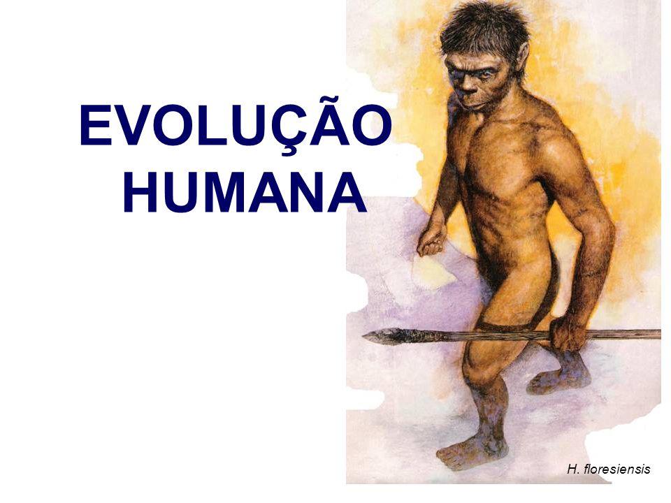 H. floresiensis EVOLUÇÃO HUMANA