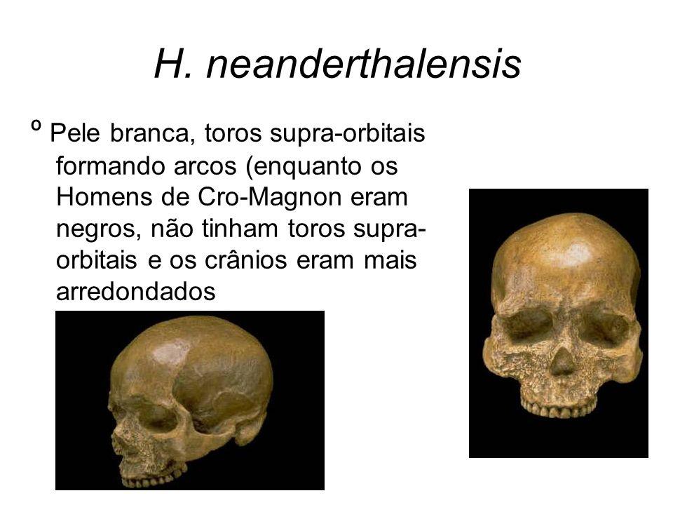H. neanderthalensis º Pele branca, toros supra-orbitais formando arcos (enquanto os Homens de Cro-Magnon eram negros, não tinham toros supra- orbitais