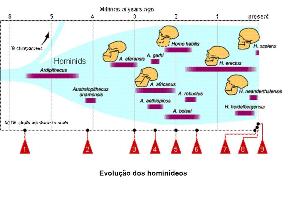 Orrorin tugenensis 8 maa, Índia colide com Eurásia, originando as Monções que alteram o clima africano 6 maa, Inicia-se a postura ereta, com o Orrorin tugenensis