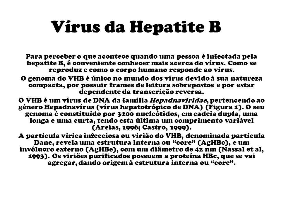 Vírus da Hepatite B Para perceber o que acontece quando uma pessoa é infectada pela hepatite B, é conveniente conhecer mais acerca do vírus.