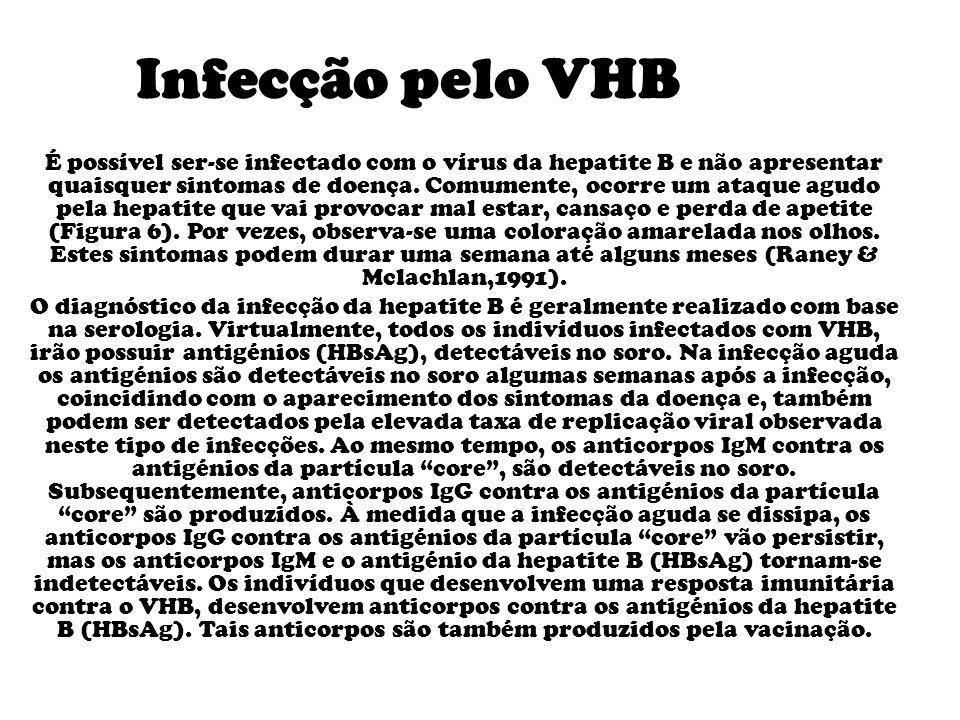 Infecção pelo VHB É possível ser-se infectado com o vírus da hepatite B e não apresentar quaisquer sintomas de doença.