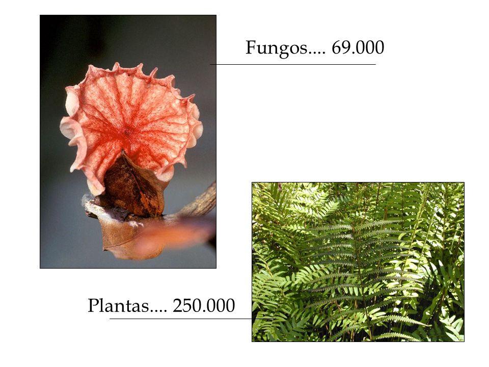 Fungos.... 69.000 Plantas.... 250.000