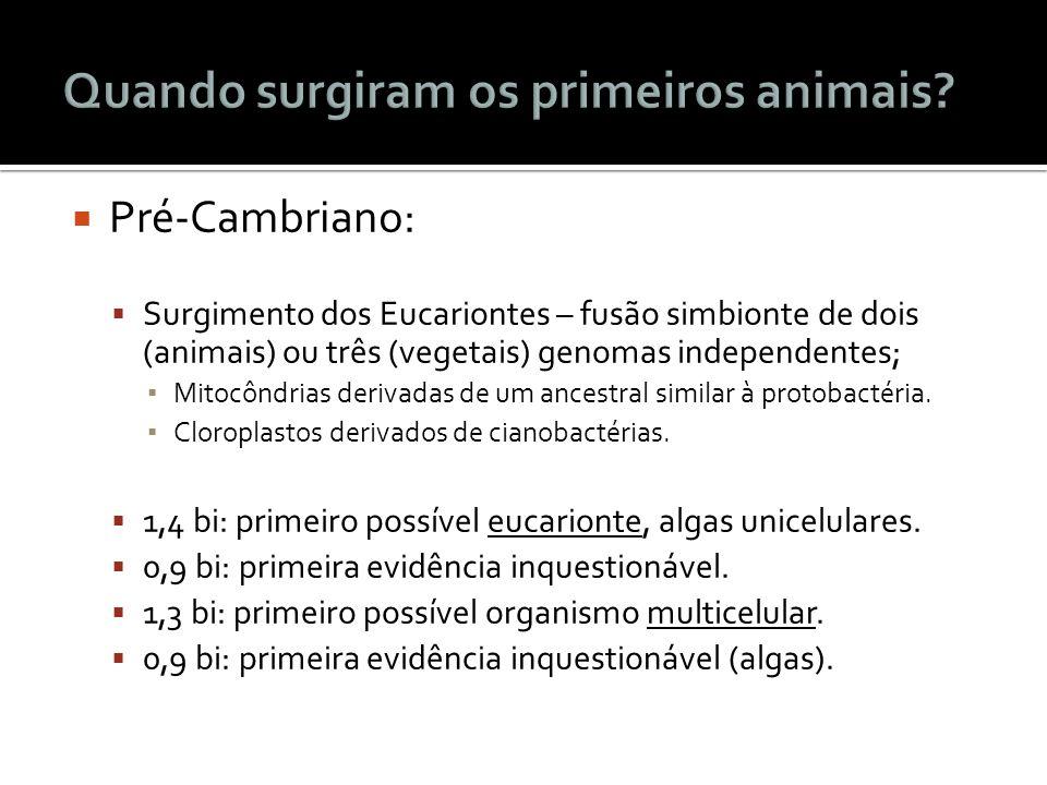 Pré-Cambriano: Surgimento dos Eucariontes – fusão simbionte de dois (animais) ou três (vegetais) genomas independentes; Mitocôndrias derivadas de um a