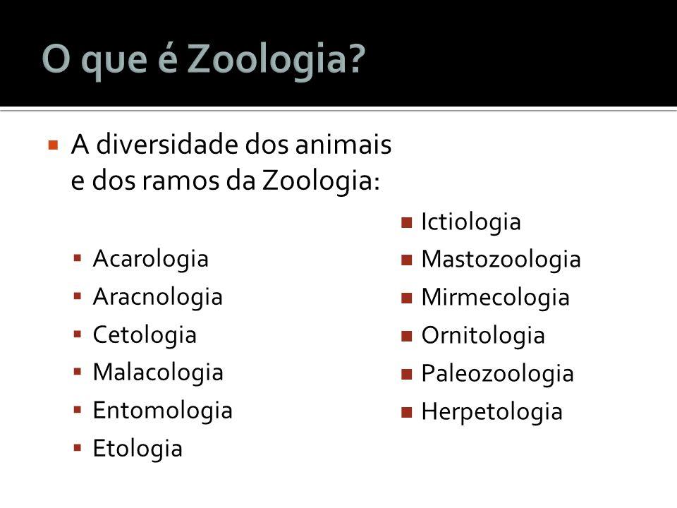 A diversidade dos animais e dos ramos da Zoologia: Acarologia Aracnologia Cetologia Malacologia Entomologia Etologia Ictiologia Mastozoologia Mirmecol