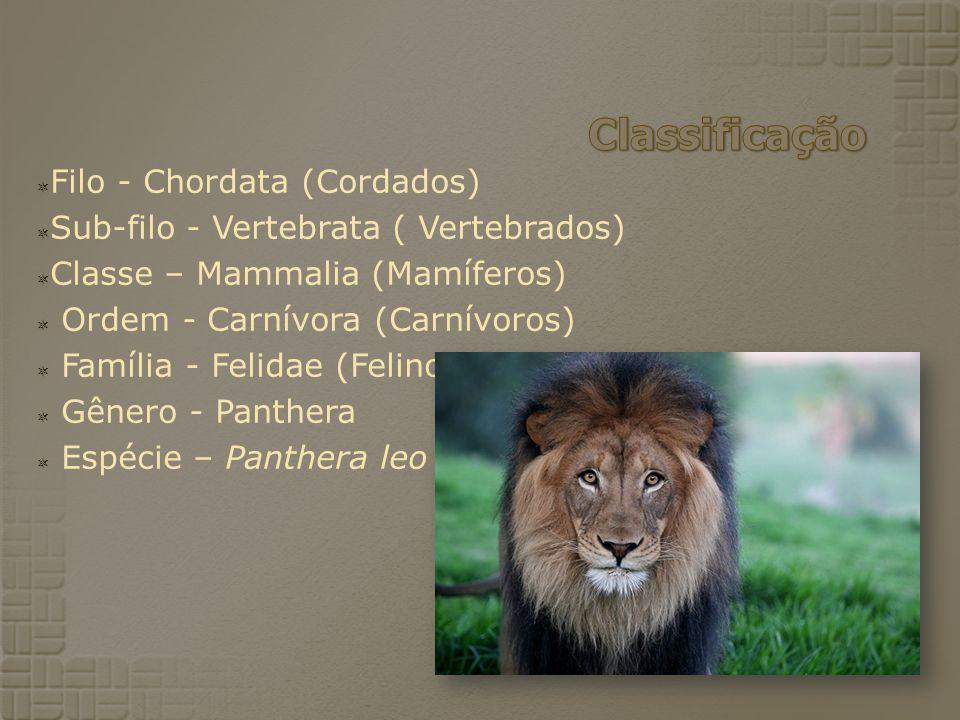 Filo - Chordata (Cordados) Sub-filo - Vertebrata ( Vertebrados) Classe – Mammalia (Mamíferos) Ordem - Carnívora (Carnívoros) Família - Felidae (Felinos) Gênero - Panthera Espécie – Panthera leo