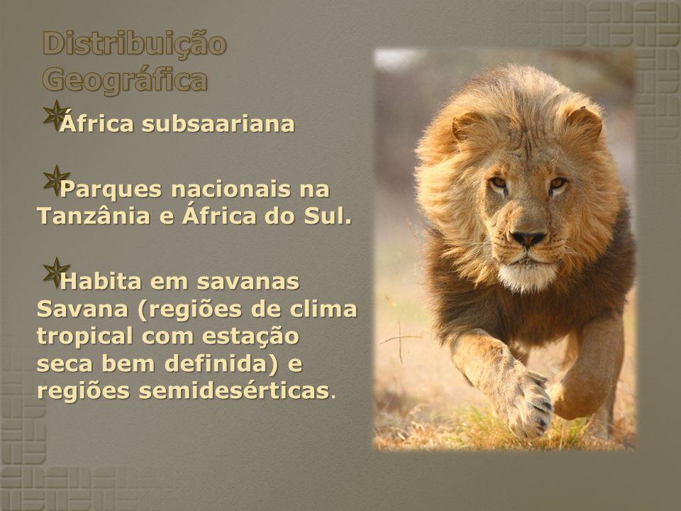 África subsaariana África subsaariana Parques nacionais na Tanzânia e África do Sul. Parques nacionais na Tanzânia e África do Sul. Habita em savanas