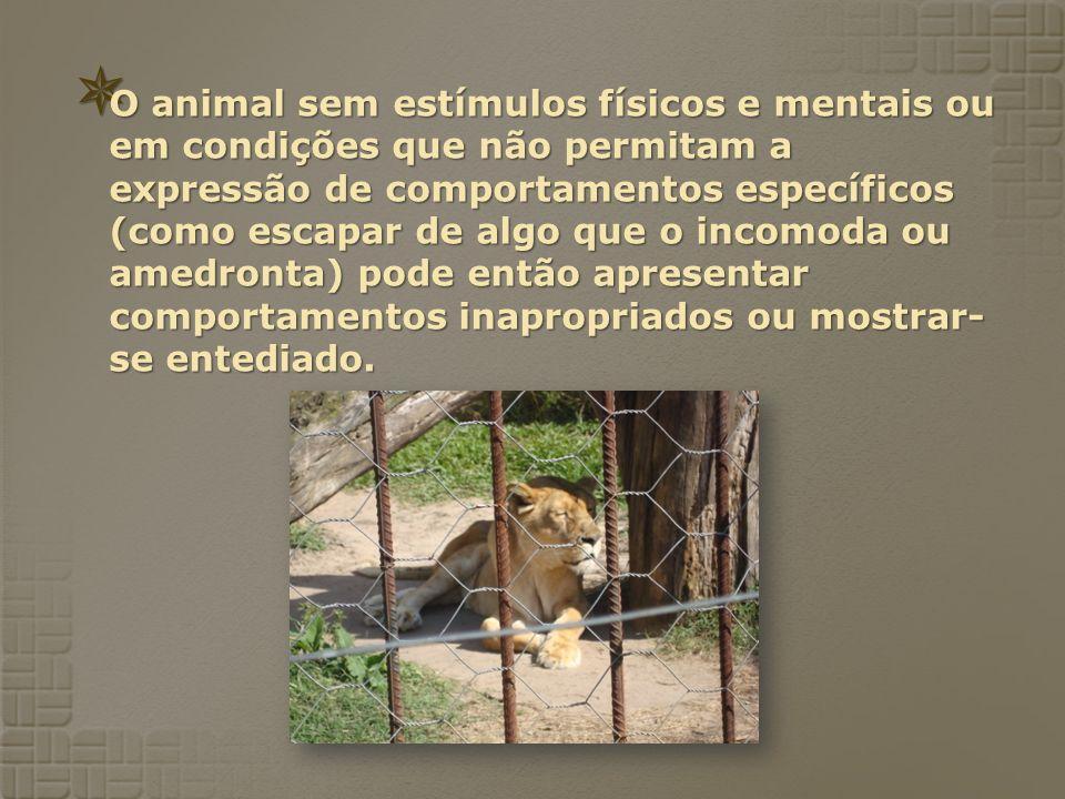 O animal sem estímulos físicos e mentais ou em condições que não permitam a expressão de comportamentos específicos (como escapar de algo que o incomo