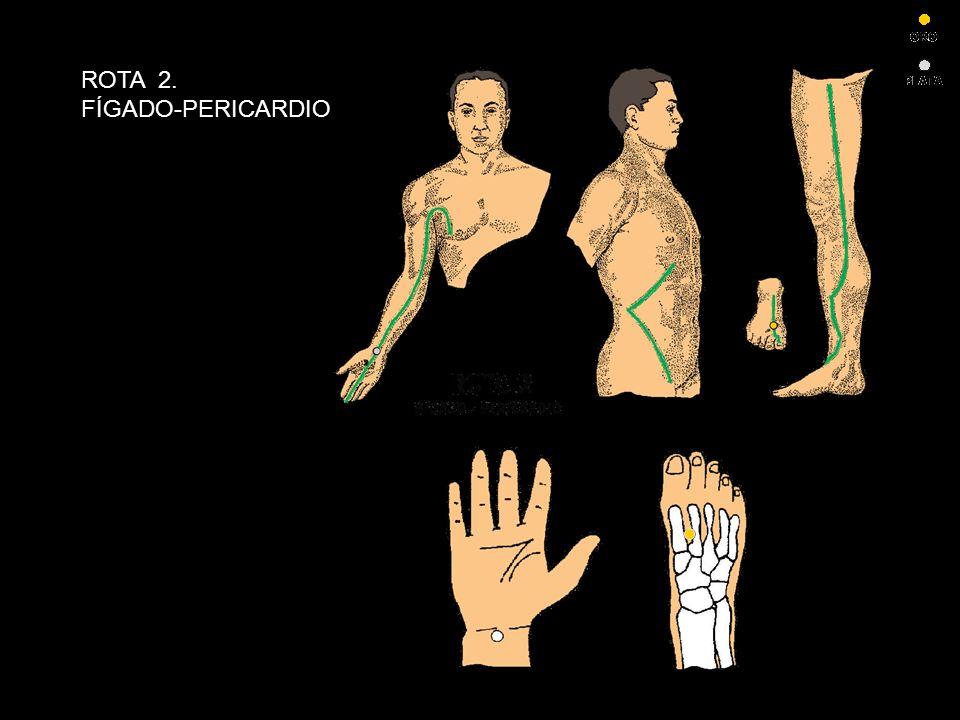 ROTA 2. FÍGADO-PERICARDIO