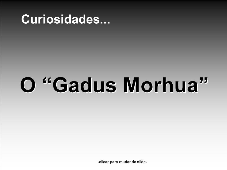 O Gadus Morhua -clicar para mudar de slide- Curiosidades...