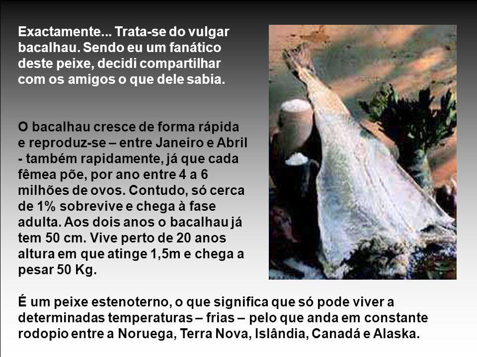 Os primeiros comerciantes deste peixe foram os Bascos, em redor do ano 1000.