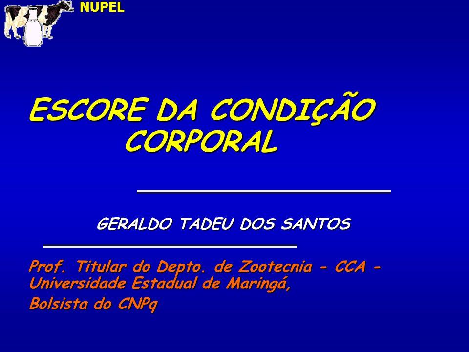 ESCORE DE CONDIÇÃO CORPORAL AO PARTO Condição corporal 1- muito magra 5 - muito gordaNUPEL