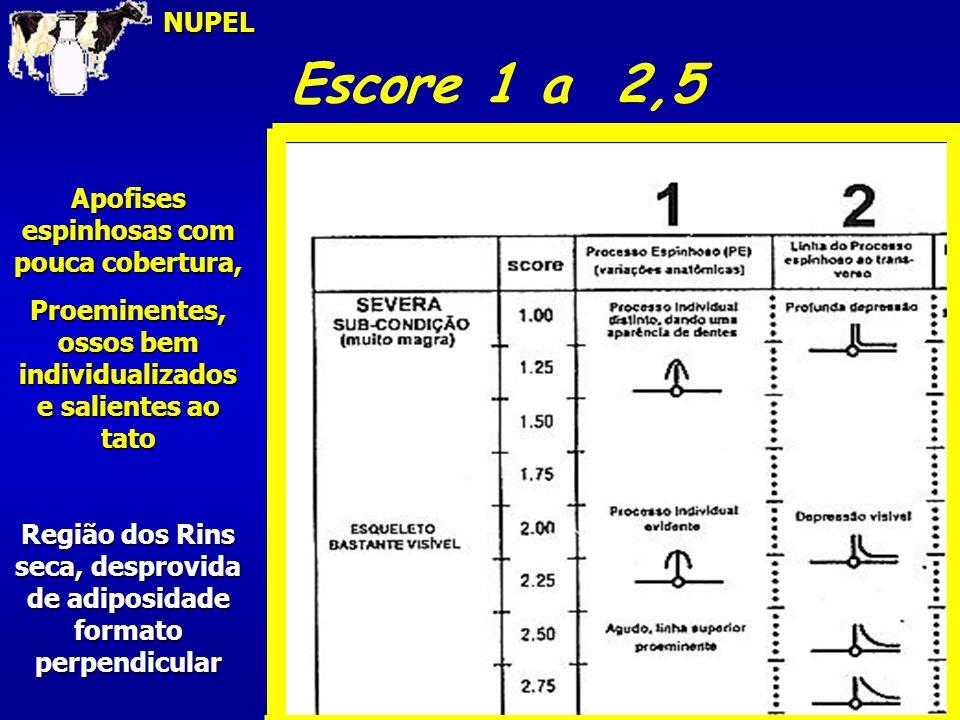 Escore 1 a 2,5NUPEL Apofises espinhosas com pouca cobertura, Proeminentes, ossos bem individualizados e salientes ao tato Região dos Rins seca, despro