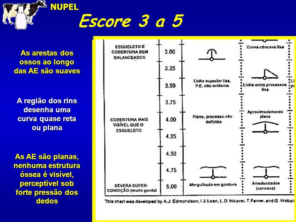 Escore 3 a 5NUPEL As arestas dos ossos ao longo das AE são suaves A região dos rins desenha uma curva quase reta ou plana As AE são planas, nenhuma es