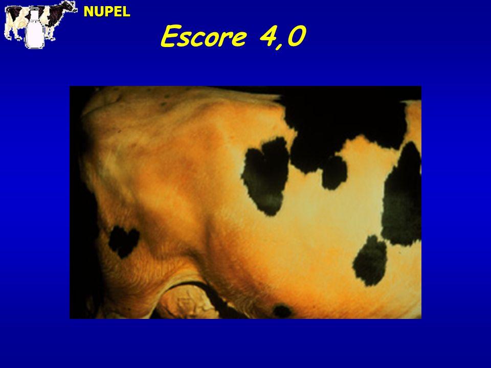 Escore 4,0NUPEL