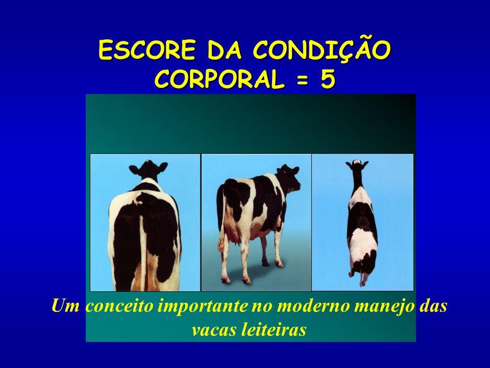 ESCORE DA CONDIÇÃO CORPORAL = 5 Um conceito importante no moderno manejo das vacas leiteiras