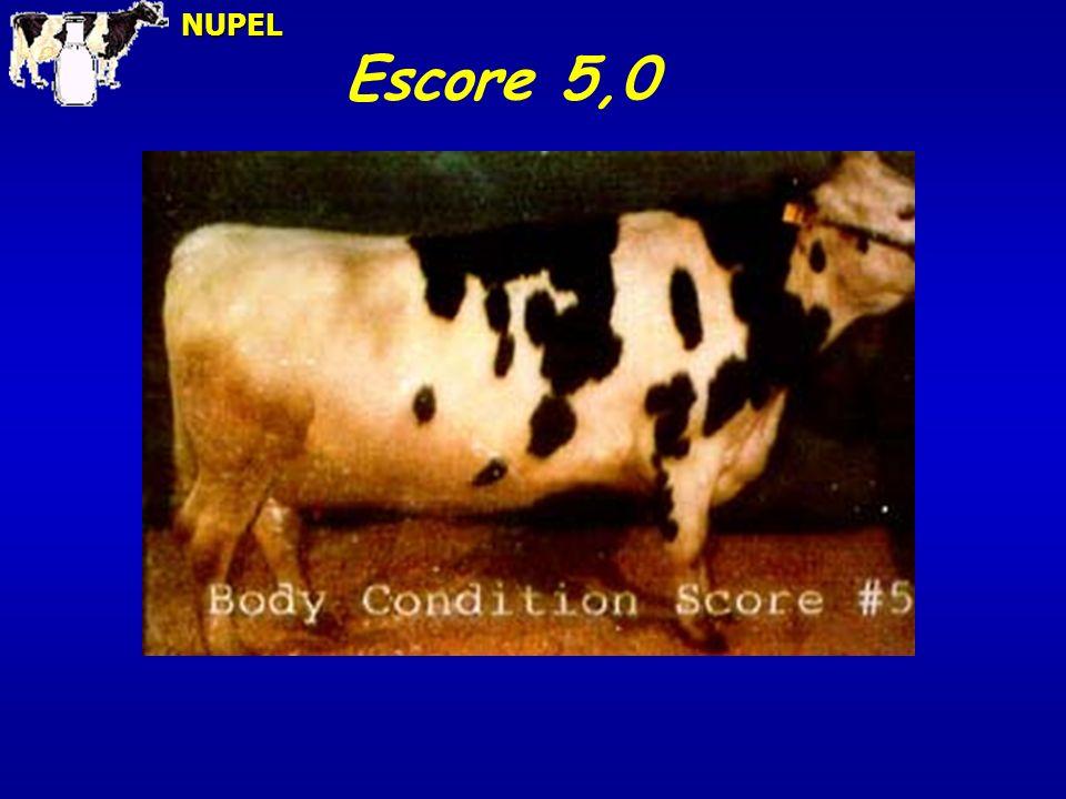 Escore 5,0NUPEL
