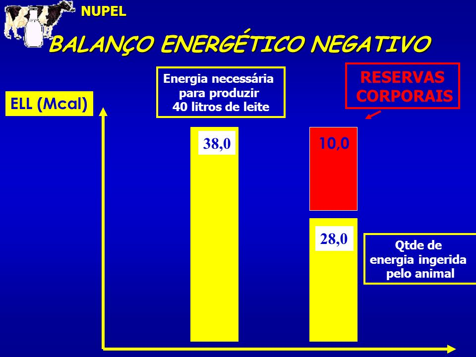 BALANÇO ENERGÉTICO NEGATIVO ELL (Mcal) 38,0 28,0 Energia necessária para produzir 40 litros de leite Qtde de energia ingerida pelo animal RESERVAS CORPORAIS 10,0NUPEL