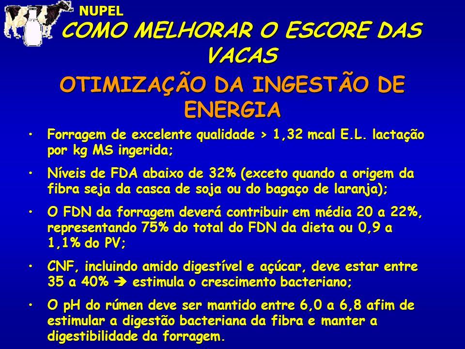 COMO MELHORAR O ESCORE DAS VACAS 10,0NUPEL OTIMIZAÇÃO DA INGESTÃO DE ENERGIA Forragem de excelente qualidade > 1,32 mcal E.L. lactação por kg MS inger