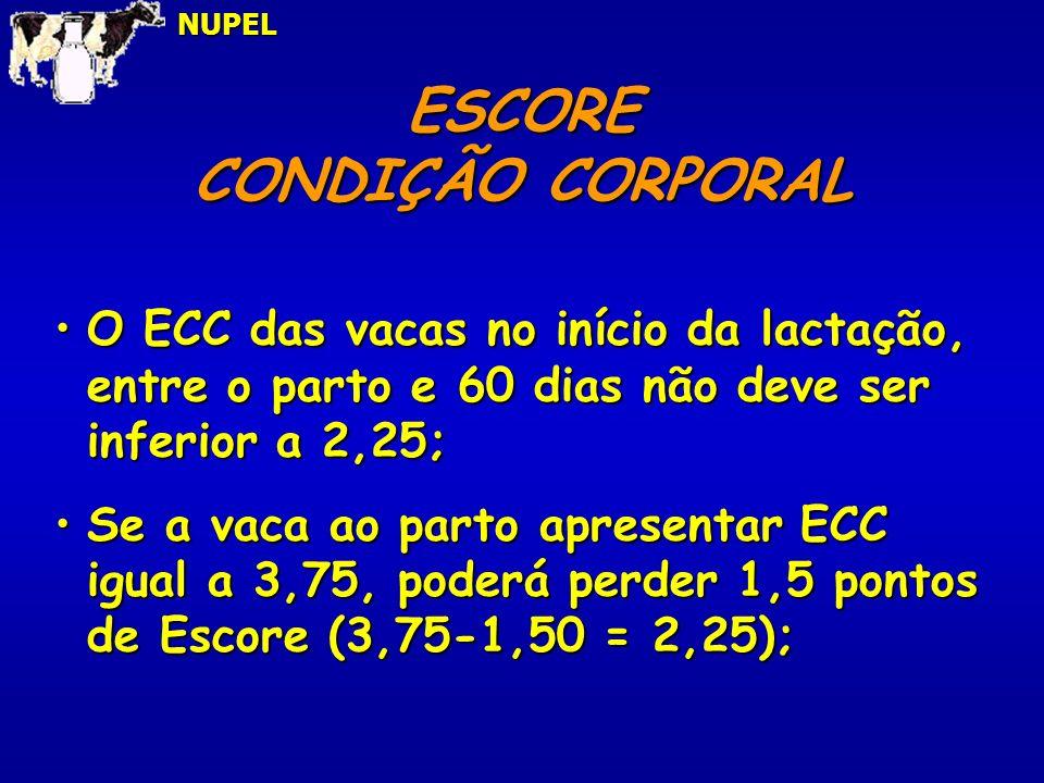 ESCORE CONDIÇÃO CORPORAL NUPEL O ECC das vacas no início da lactação, entre o parto e 60 dias não deve ser inferior a 2,25;O ECC das vacas no início d