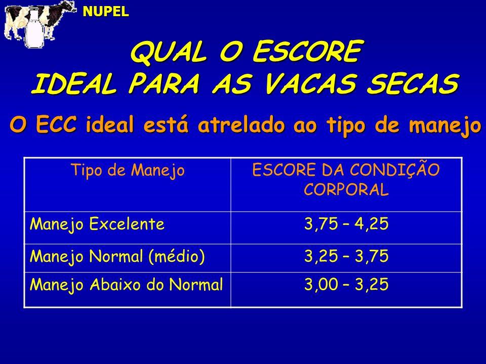 QUAL O ESCORE IDEAL PARA AS VACAS SECAS NUPEL O ECC ideal está atrelado ao tipo de manejo Tipo de ManejoESCORE DA CONDIÇÃO CORPORAL Manejo Excelente3,75 – 4,25 Manejo Normal (médio)3,25 – 3,75 Manejo Abaixo do Normal3,00 – 3,25