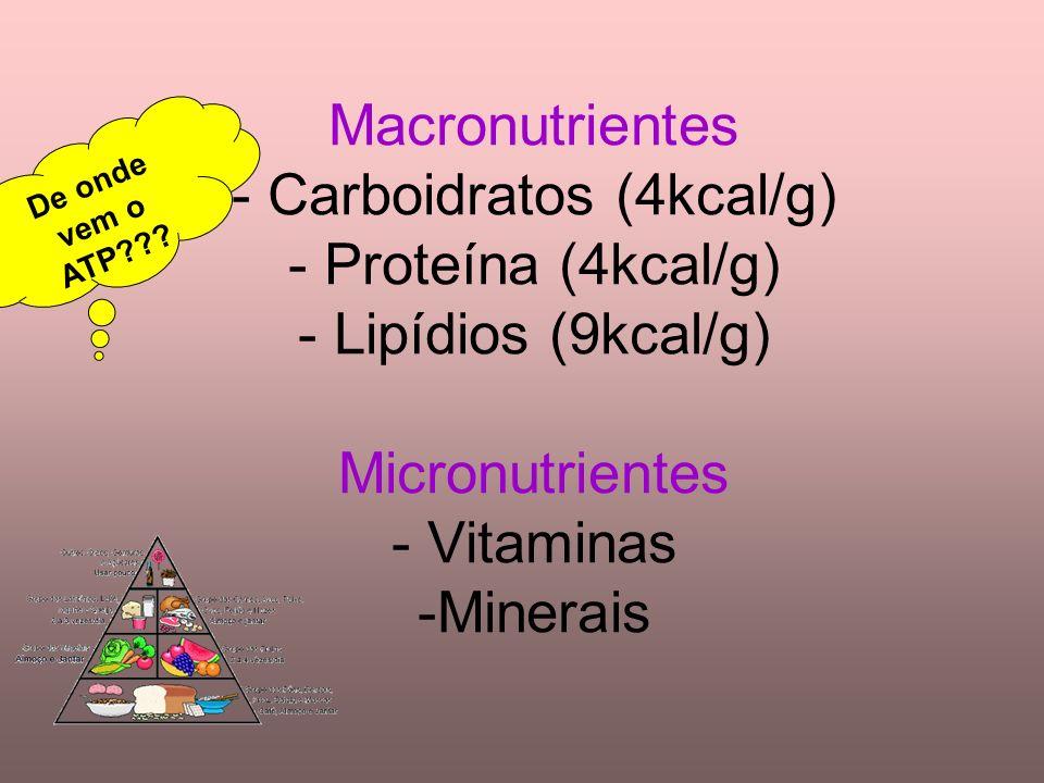 Macronutrientes - Carboidratos (4kcal/g) - Proteína (4kcal/g) - Lipídios (9kcal/g) Micronutrientes - Vitaminas -Minerais De onde vem o ATP???