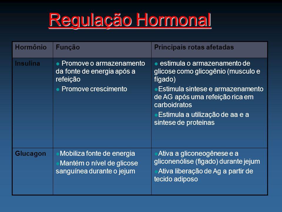 Regulação Hormonal HormônioFunçãoPrincipais rotas afetadas Insulina Promove o armazenamento da fonte de energia após a refeição Promove crescimento es
