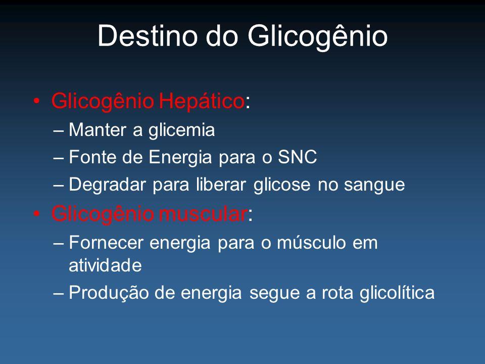 Destino do Glicogênio Glicogênio Hepático: –Manter a glicemia –Fonte de Energia para o SNC –Degradar para liberar glicose no sangue Glicogênio muscula