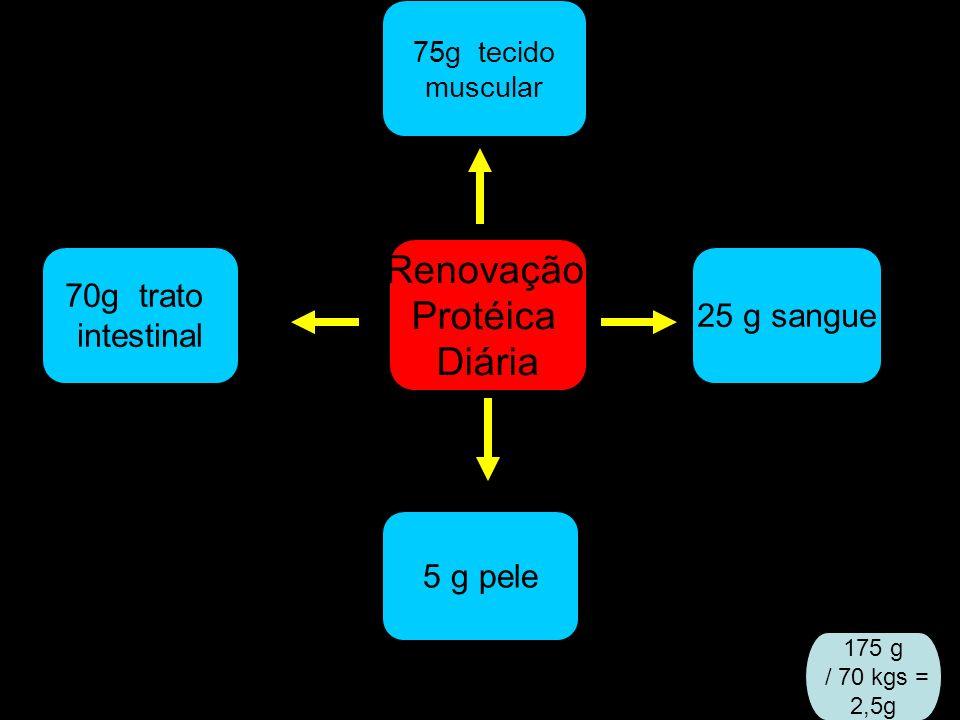 Renovação Protéica Diária 70g trato intestinal 25 g sangue 75g tecido muscular 5 g pele 175 g / 70 kgs = 2,5g