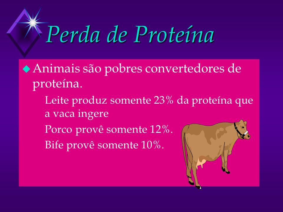 Perda de Proteína u Animais são pobres convertedores de proteína. u Leite produz somente 23% da proteína que a vaca ingere u Porco provê somente 12%.