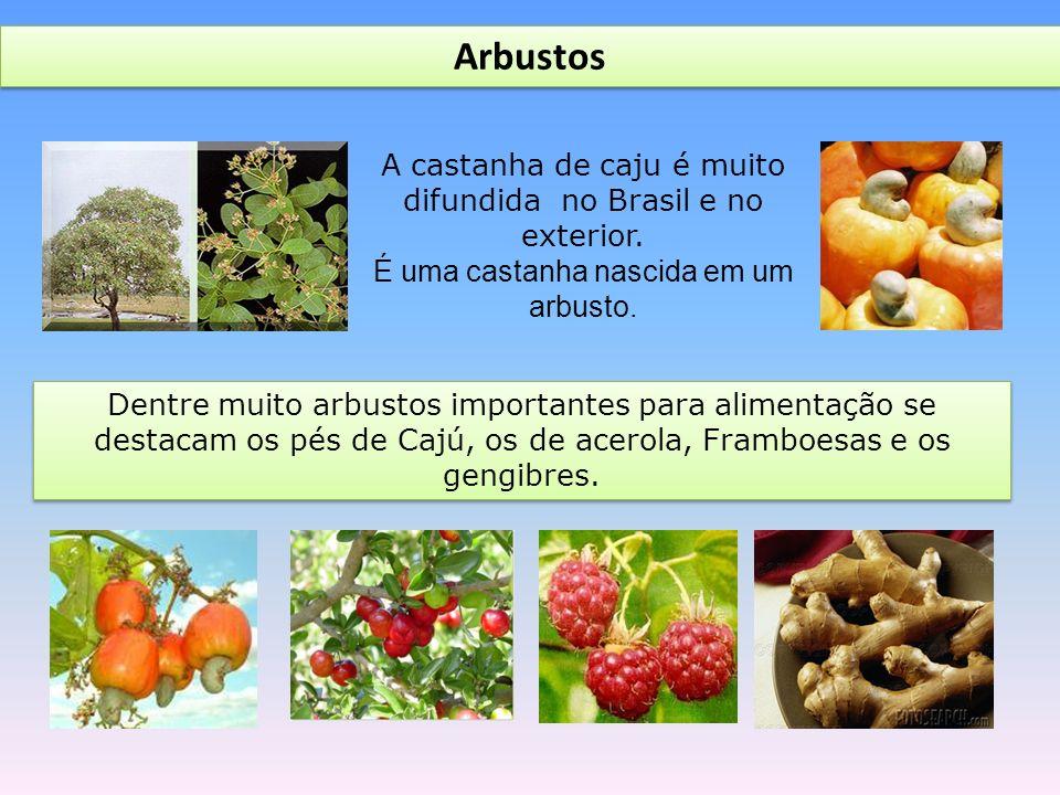Arbustos A castanha de caju é muito difundida no Brasil e no exterior.