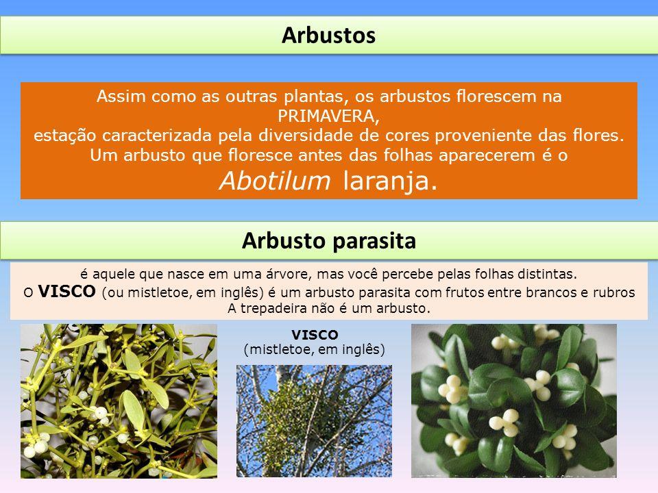 Assim como as outras plantas, os arbustos florescem na PRIMAVERA, estação caracterizada pela diversidade de cores proveniente das flores.