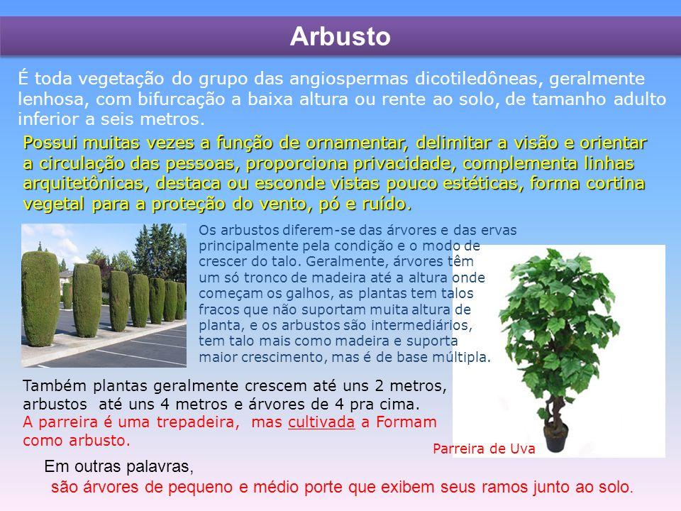 Arbusto Os arbustos diferem-se das árvores e das ervas principalmente pela condição e o modo de crescer do talo.