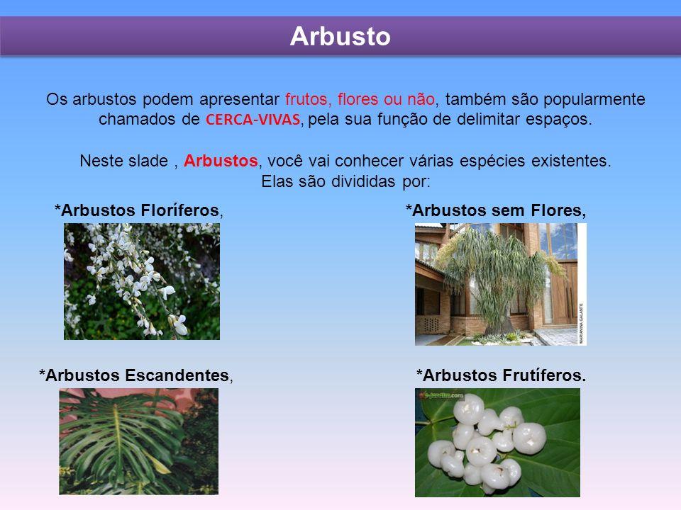 Os arbustos podem apresentar frutos, flores ou não, também são popularmente chamados de CERCA-VIVAS, pela sua função de delimitar espaços.