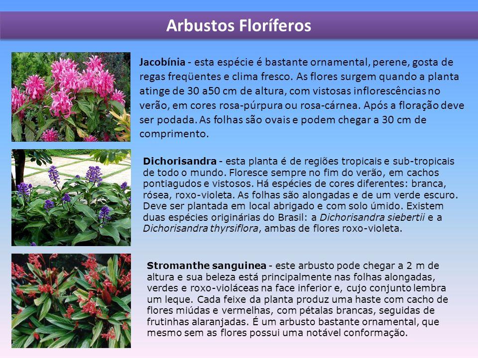 Arbustos Floríferos Jacobínia - esta espécie é bastante ornamental, perene, gosta de regas freqüentes e clima fresco.