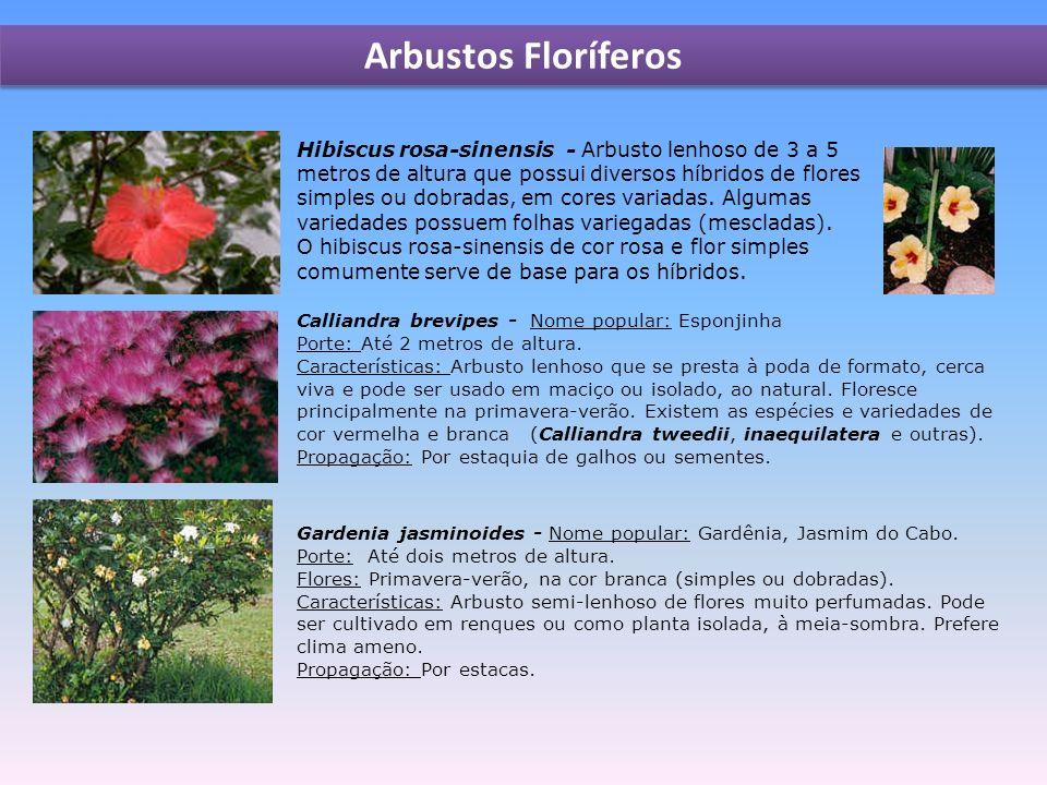 Hibiscus rosa-sinensis - Arbusto lenhoso de 3 a 5 metros de altura que possui diversos híbridos de flores simples ou dobradas, em cores variadas.